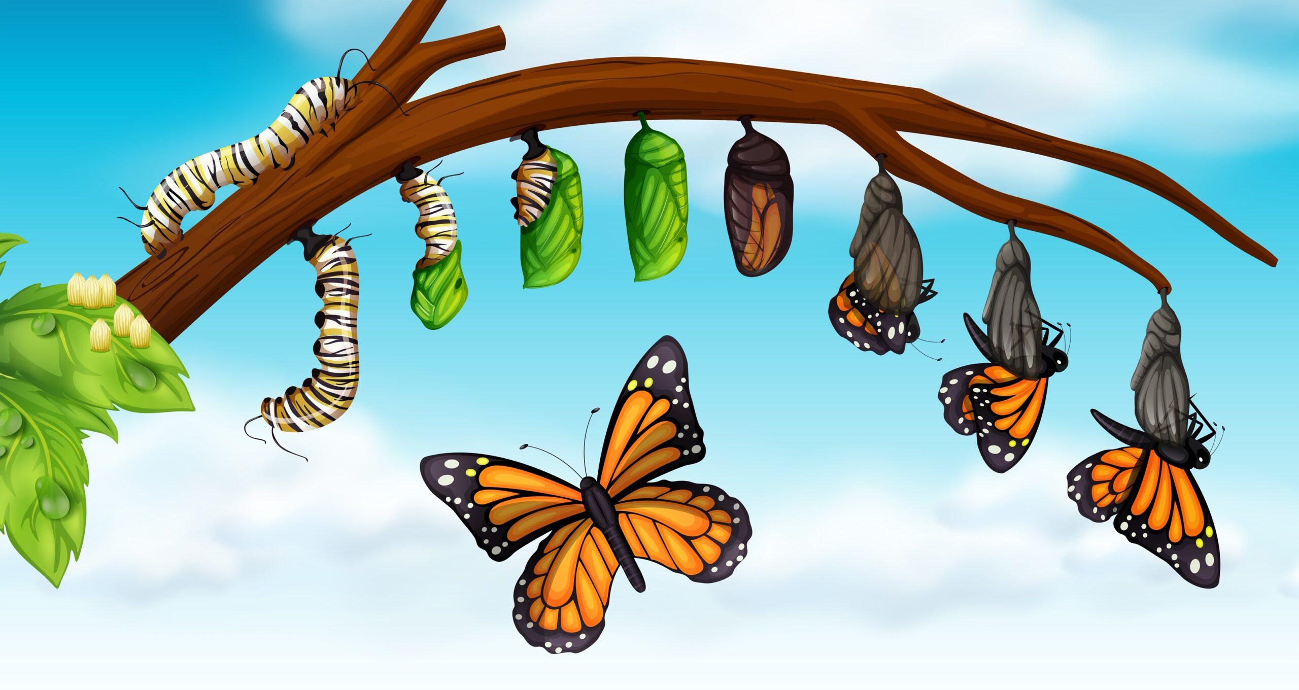 Daily Renewal, Detoxification, and Purification